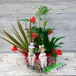 Состав: композиция из горшечных растений