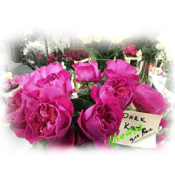 Состав: Английские розы розовый цвет
