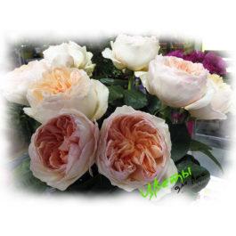 Состав: английская роза нежно-персикового цвета