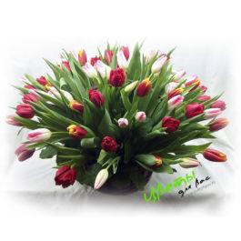 Состав: корзинка с тюльпанами 49 шт
