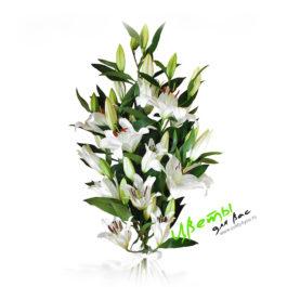 Состав: Строгий и благородный букет из 9 белых лилий
