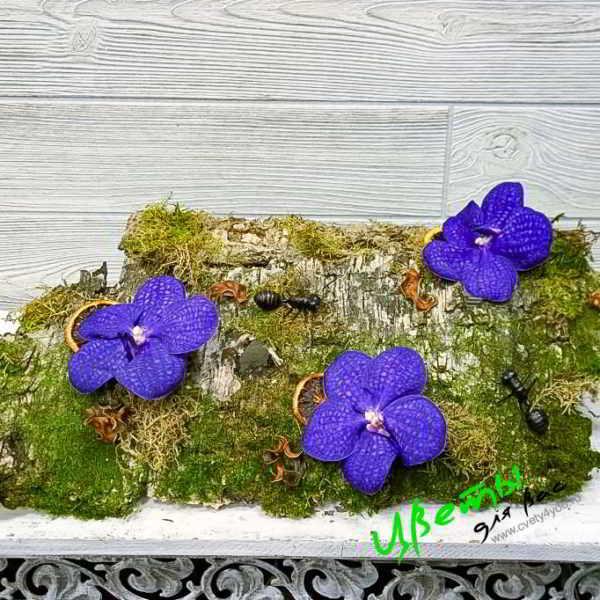 Состав: орхидея Ванда на коре