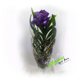 Состав: орхидея Ванда