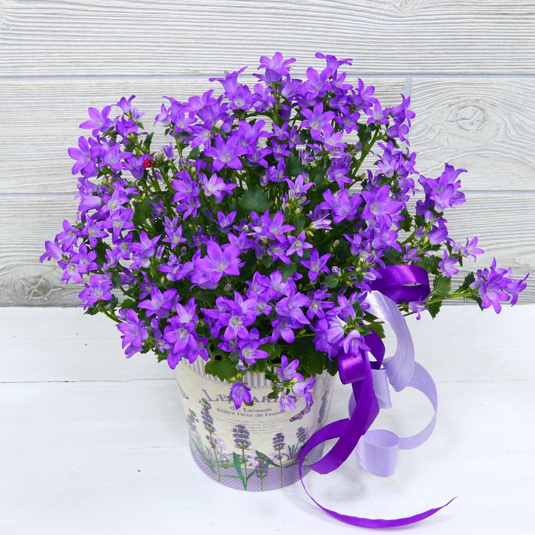 Спасибо, колокольчики цветы купить киев