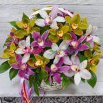 orhideja-cimbidium