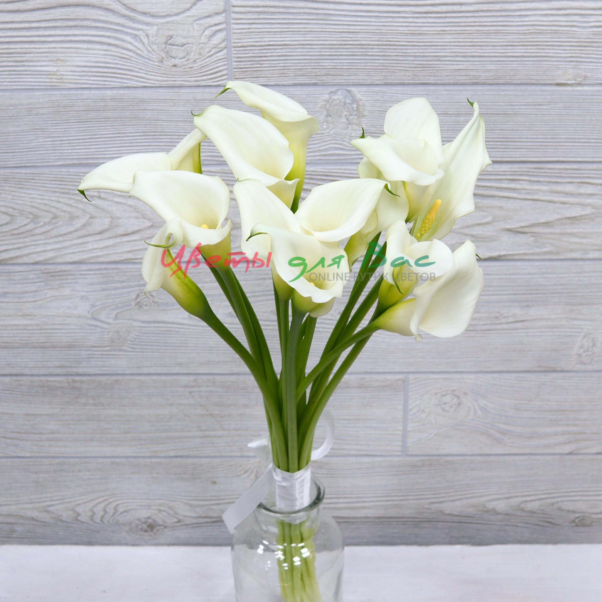 Садовых цветов, цветы каллы купить днепр